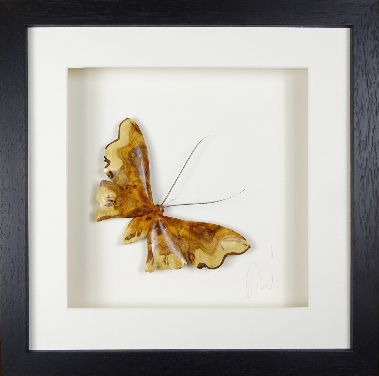 Yew moth 390x 390 AVAILABLE NOW!