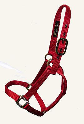 Big D Plain Halter ( Horse)