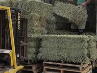 2nd Cutting Orchard Grass Hay