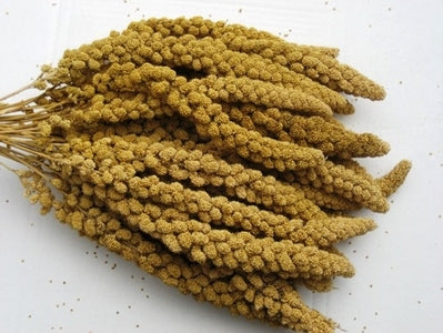 5# Box Spray Millet