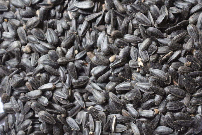 Black Oil Sunflower Seed 50#