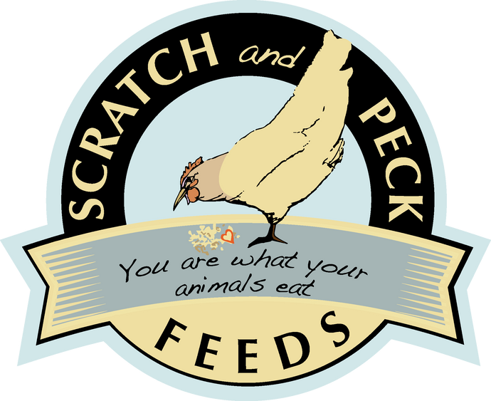Scratch & Peck Turkey Grower 40#