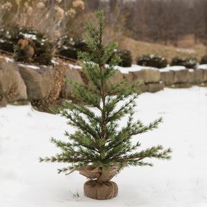 2' PINE TREE WITH BURLAP BASE