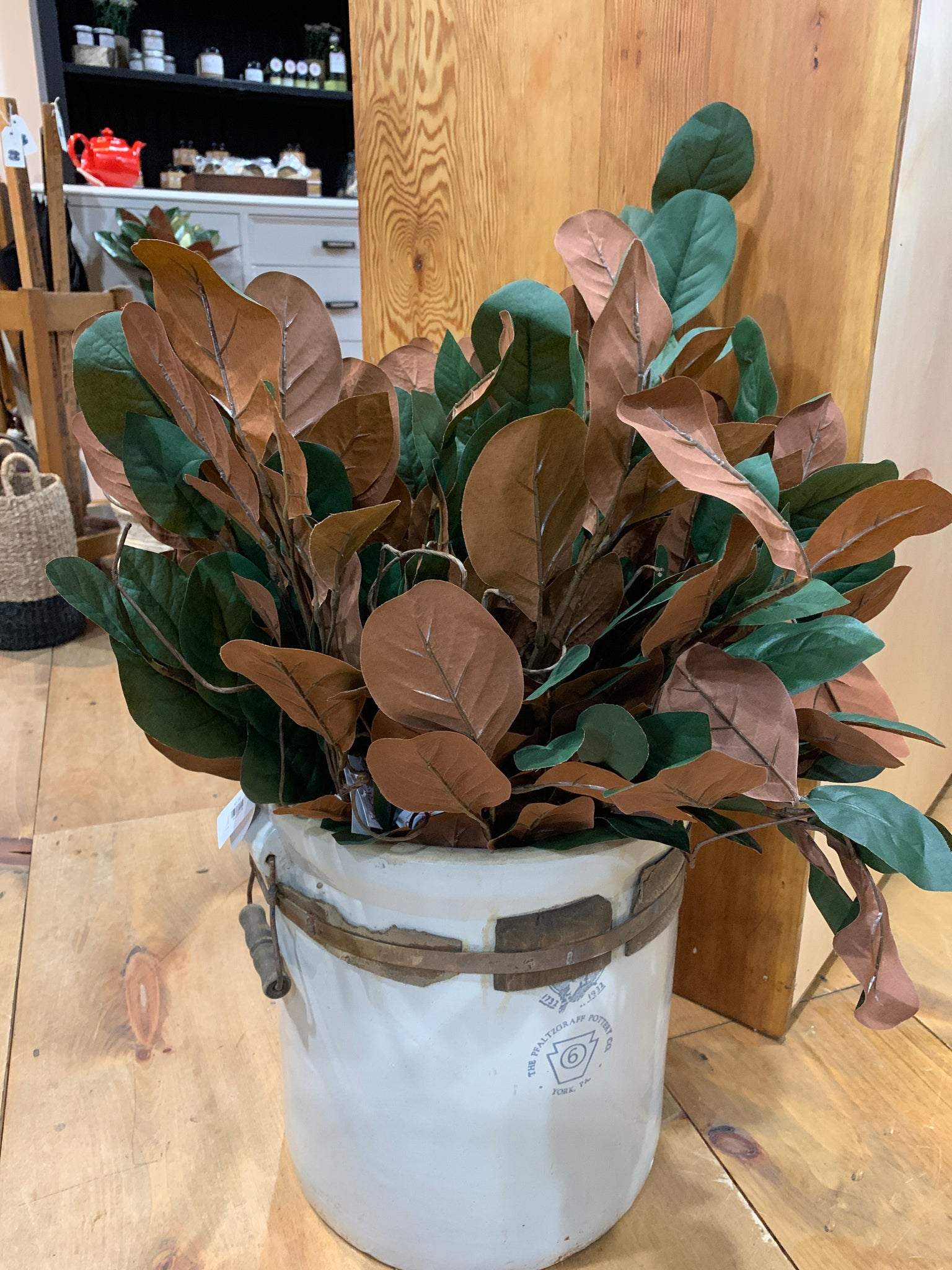 Large Magnolia Leaves  - Pick