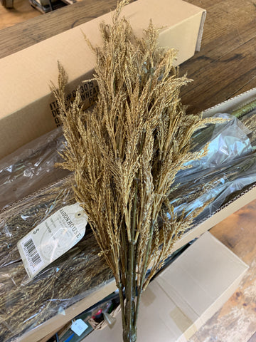 Wheat Bush 24""