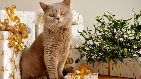 holiday foods and plants toxic to pets holiday home safety tips