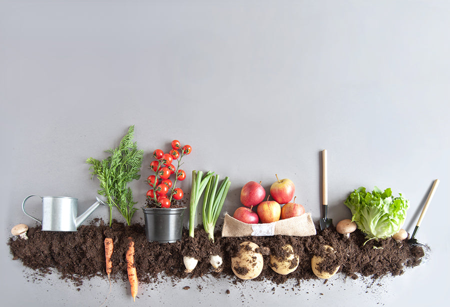 Create Eco-Friendly Habits With Your Own Backyard Compost