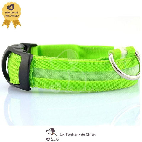 Image of collier lumineux pour chien