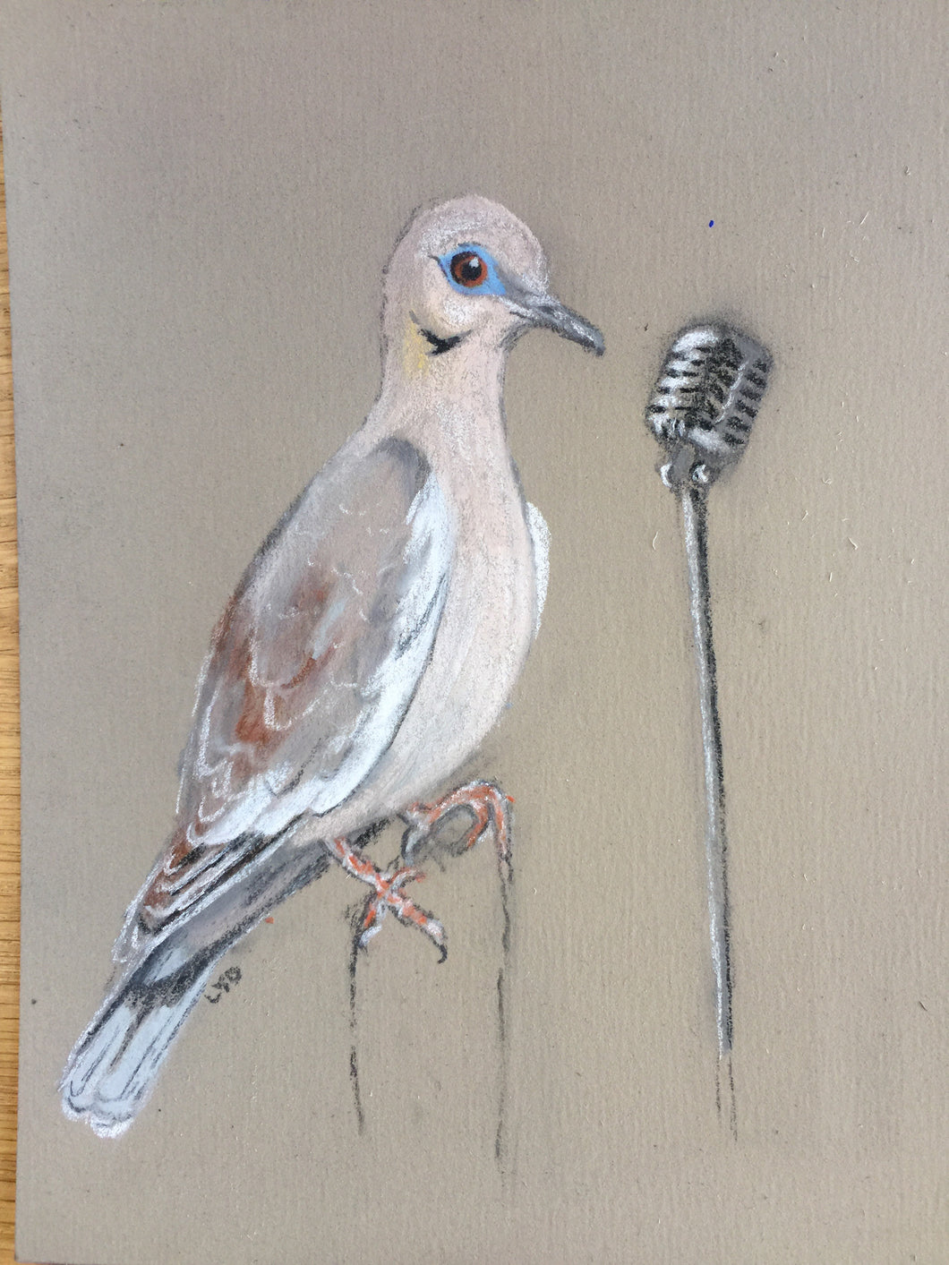 White-winged Dove Sings a Song