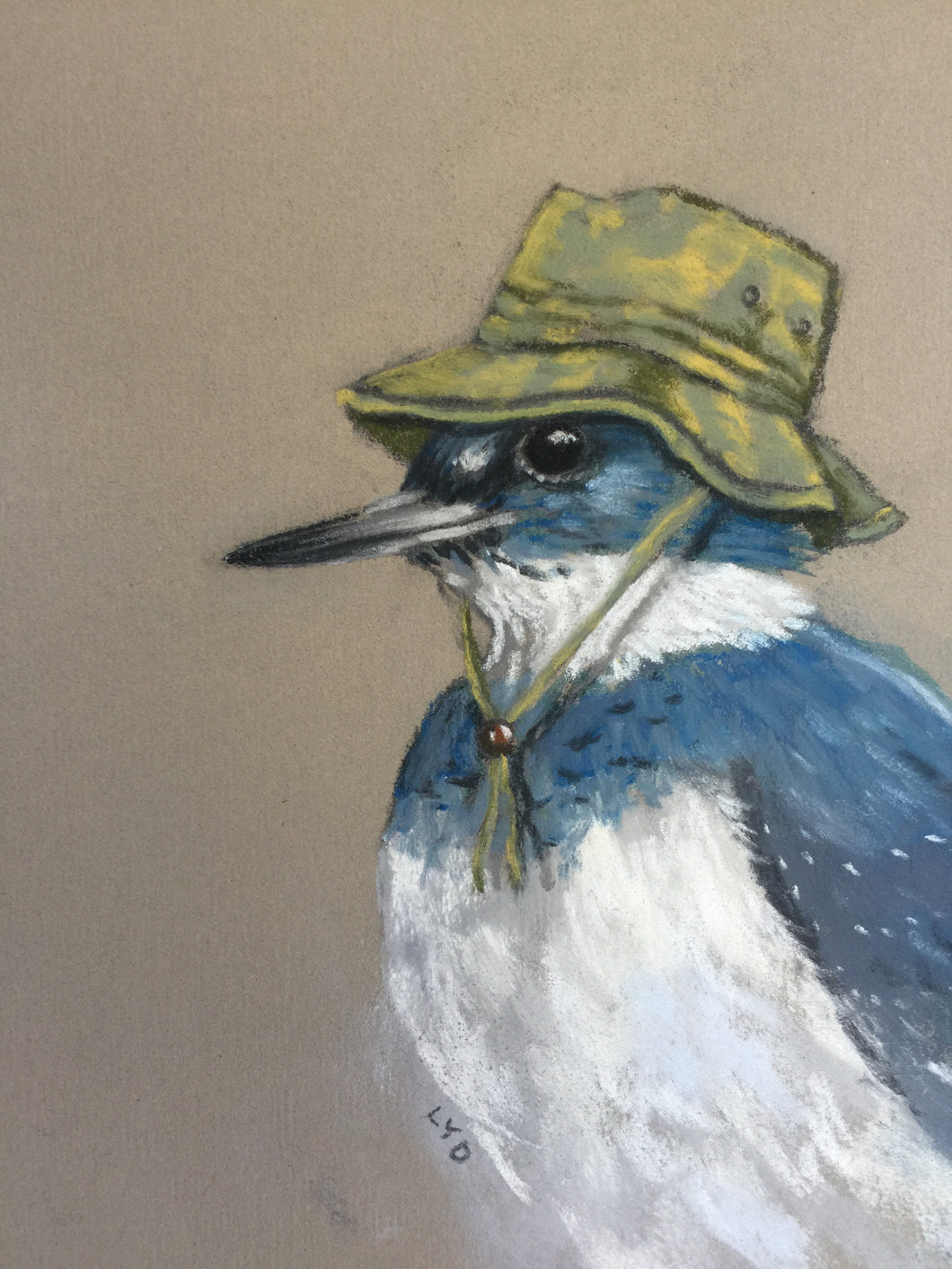 Belted Kingfisher in a Fishing Hat