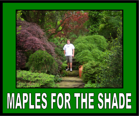 Buy Japanese Maples For The Shade