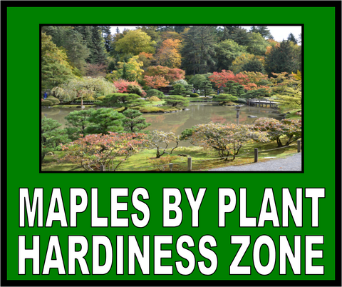 Buy Maples By Your Plant Hardiness Zone