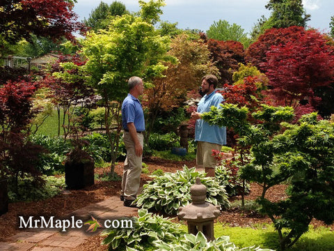 Design Your Garden With Japanese Maples – Mr Maple │ Buy Japanese on herb garden under tree, idea for plant around tree, yoga under tree, lighting under tree, books under tree, patio under tree, composting under tree, perennial gardens under tree, plants under tree, annuals under tree, wood under tree, woman under tree, under the tree, roses under tree, home under tree, girl under tree, flowers under tree, container garden under tree, decorating under tree, buddha under tree,