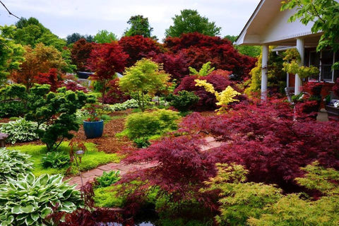 Schedule An Appointment Mr Maple │ Buy Japanese Maple Trees