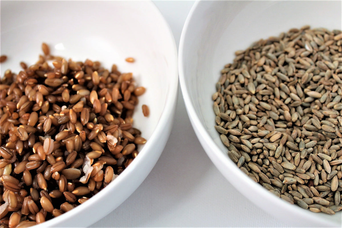 Back to Basics: How to Cook Rye Berries