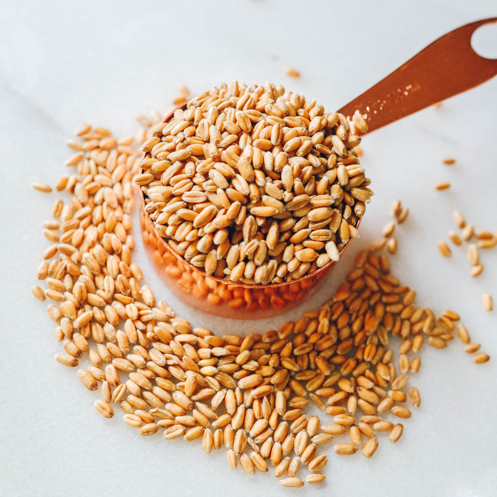 Organic Sprouted Whole Spelt - Organicgrains.com