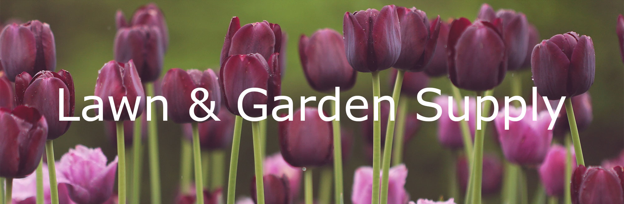 Lawn & Garden Supply, tulips growing in a lawn