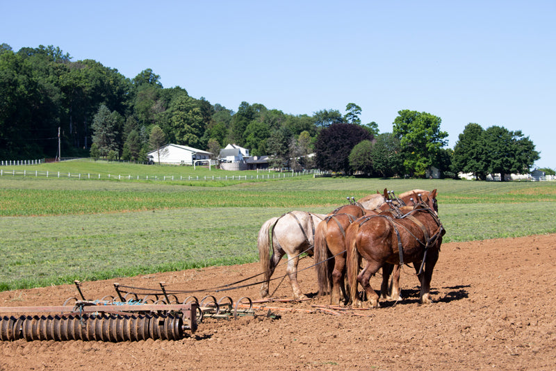 Horses plowing in a road