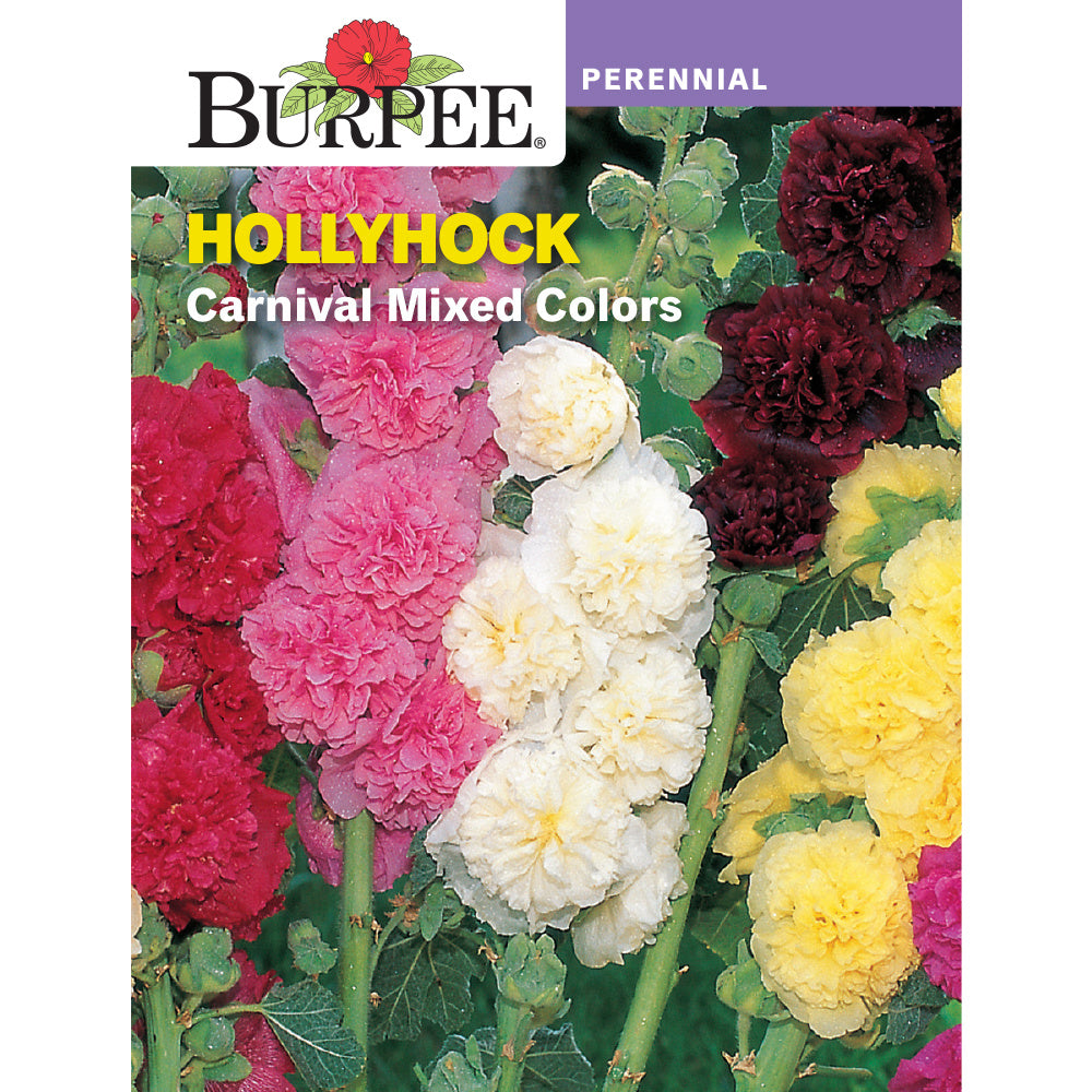Hollyhock flower seed pack