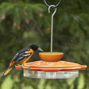 Audubon Classic Oriole Feeder with Bird Feeding