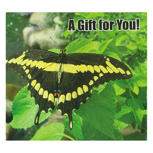 Gift card holder Yellow Butterfly on Green Leaves