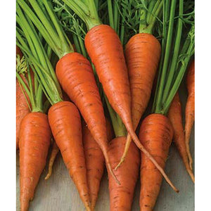Short and sweet carrots