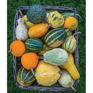 Basket of mixed gourds