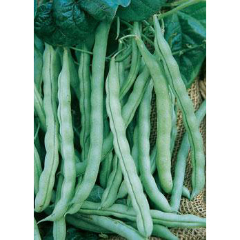 Kentucky Wonder Pole Beans 9919402