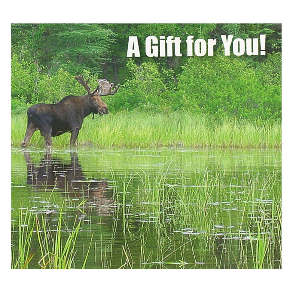 Good's Store Gift Card in a Moose at Lake Holder