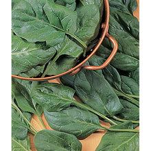 Salad Sensation Hybrid Spinach Seed Pack 51529