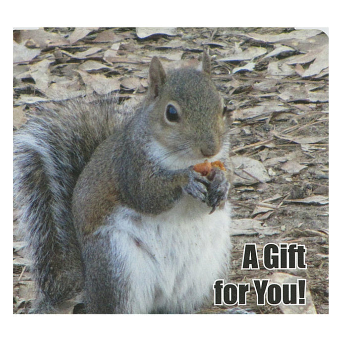 Good's Store Gift Card in a Gray Squirrel Holder