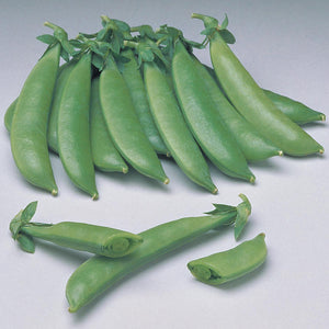 Rohrer Seeds Sugar Sprint snap peas.