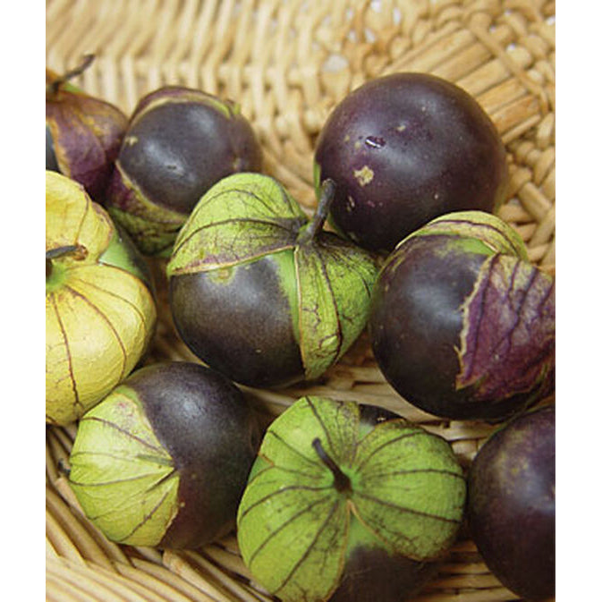 Purple tomatillas