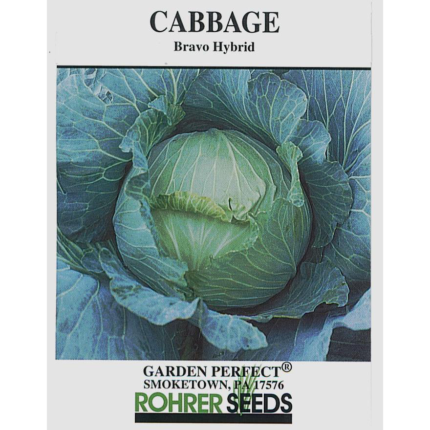 Bravo cabbage seed pack