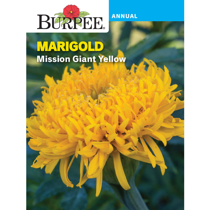Mission Giant Marigold flower seed pack