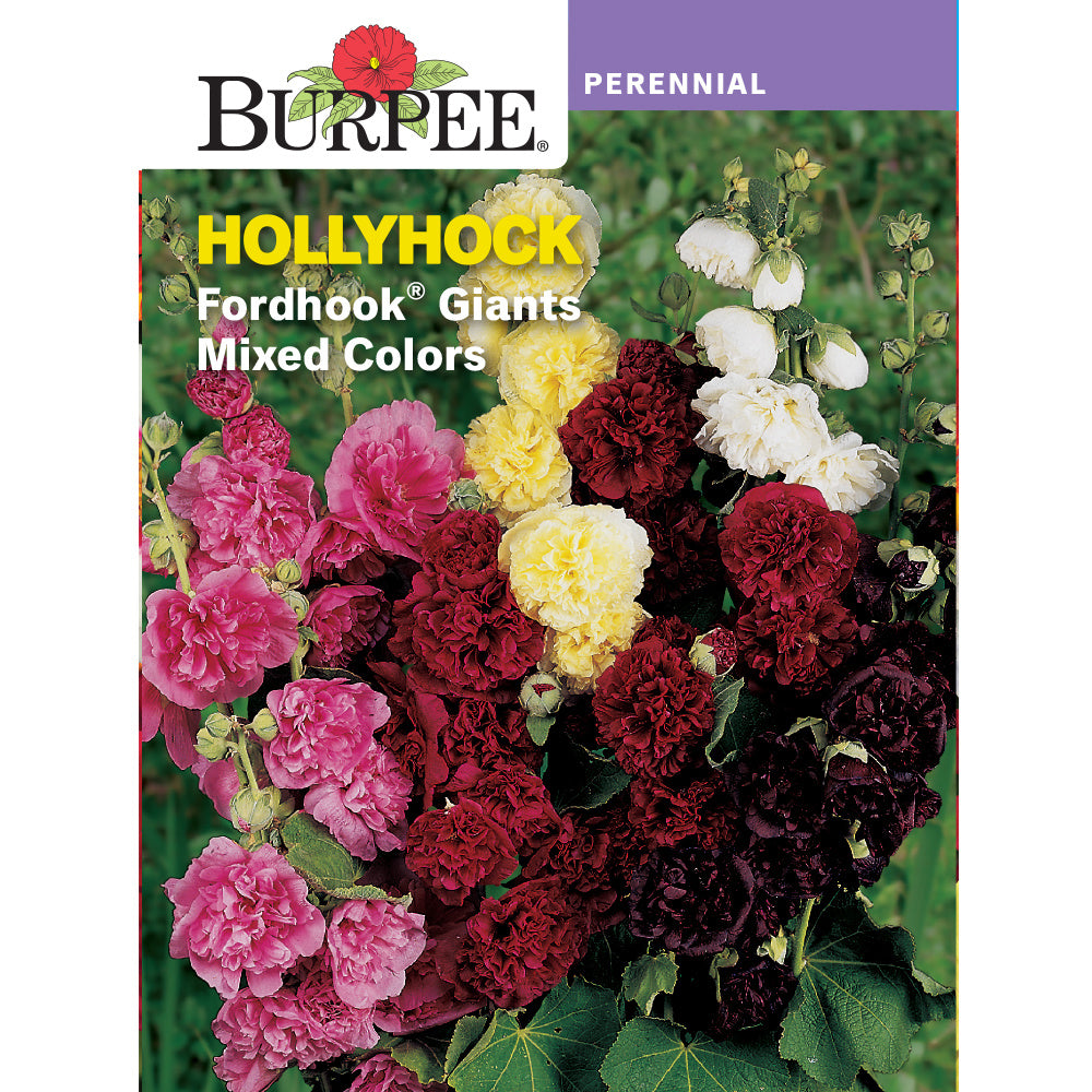 Fordhook Hollyhock flower seeds