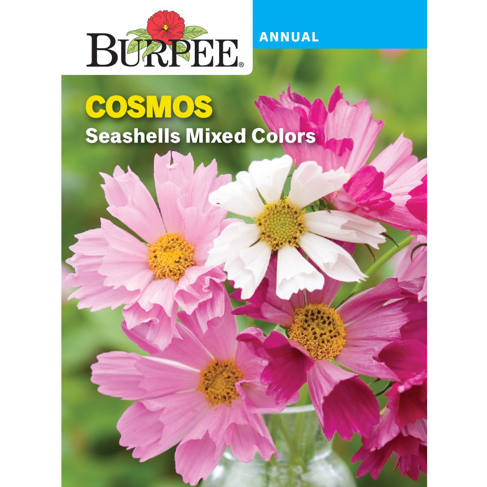 Seashells Cosmos flower seed pack