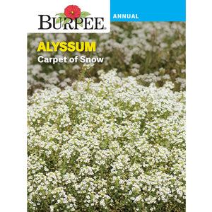 Carpet of Snow Alyssum seed pack
