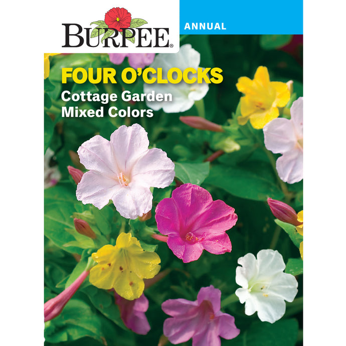 Four o'clock flowers