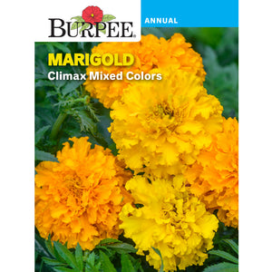 Marigold flower seed pack