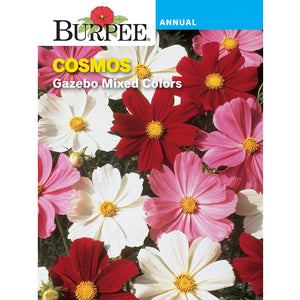 Cosmos flower pack