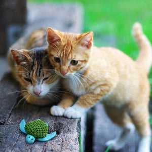 Kittens looking at turtle