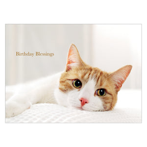 Cat Birthday card.