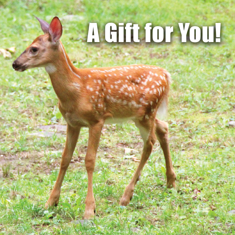 Fawn Gift Card