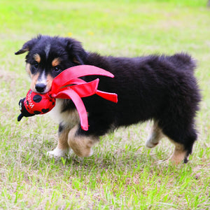 Puppy carrying a Wubba toy