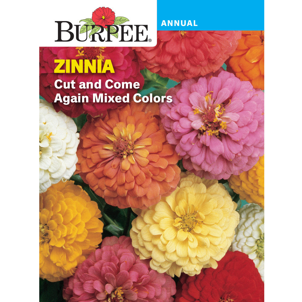 Cut and Come Again zinnia flowers