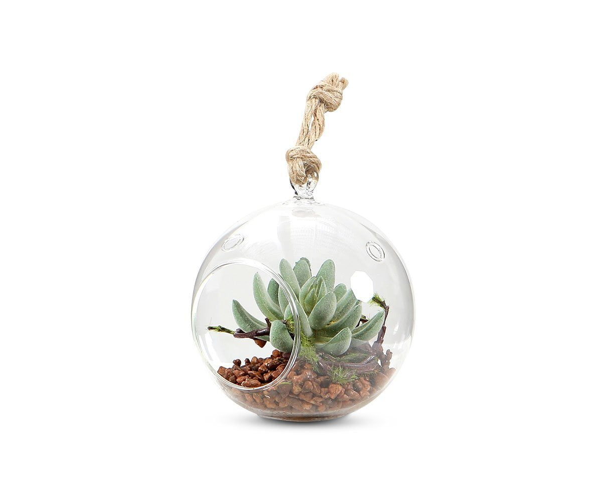 Faux Succulent Arrangement in Hanging Glass Globe