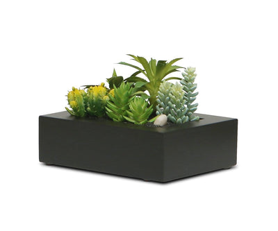 Faux Succulent Collection in Small Rectangular Planter Green - Scandinavian Designs