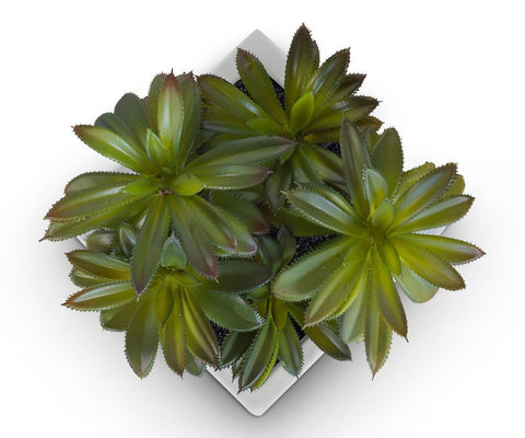 Green Faux Succulent In Square Container WHITE - Scandinavian Designs