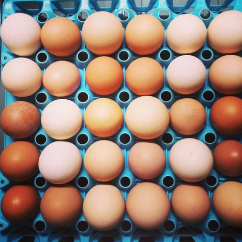 Runnymede Farm - Pasture Raised Eggs (1 dozen)
